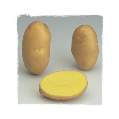 Patata AGRIA pezzatura 35/55