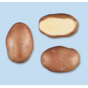 Patata DESIREE pezzatura 40/50C