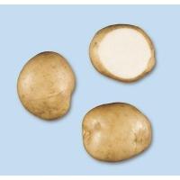 Patata KENNEBEC pezzatura 35/50
