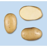 Patata MONALISA pezzatura 45/50C