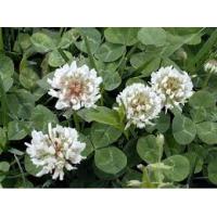 Dissuasore BioDinamico per Trifolium Repens - 1L