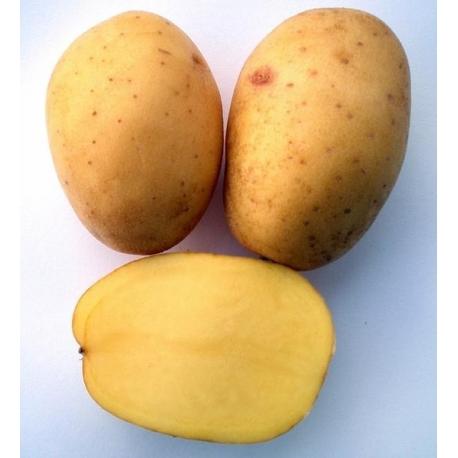 Patata JELLY pezzatura 35/50