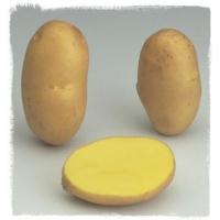 Patata AGRIA pezzatura 28/45S