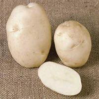 Patata DIVAA pezzatura 28/45S