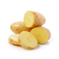Patata PENELOPE pezzatura 28/40 G