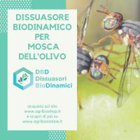 Dissuasore BioDinamico per Mosca dell'ulivo - 1L