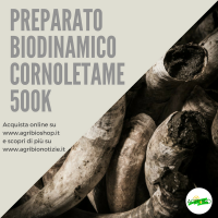 500K CORNOLETAME