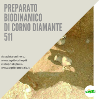 511 CORNO DIAMANTE