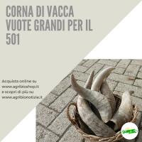 CORNA VUOTE PER 501