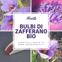 BULBI DI ZAFFERANO BIO