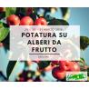 POTATURA SU ABERI DA FRUTTO