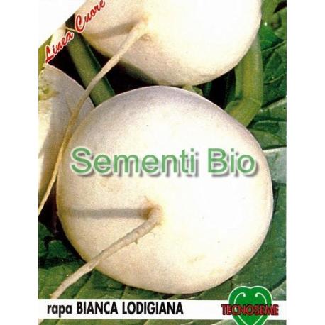RAPA BIANCA PIATTA LODIGIANA - BIOSEME 3626