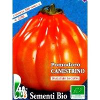 POMODORO CANESTRINO - BIOSEME 3297