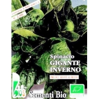 SPINACIO GIGANTE D'INVERNO - BIOSEME 4165