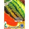 ANGURIA CHARLESTON GRAY - BIOSEME 0201