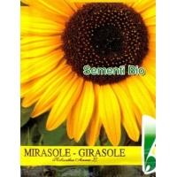 GIRASOLE - BIOSEME 7139