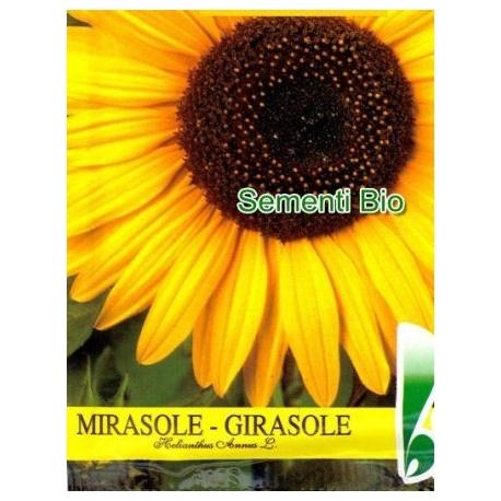 GIRASOLE - BIOSEME AR39