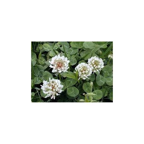 Dissuasore per Trifolium repens- 1L