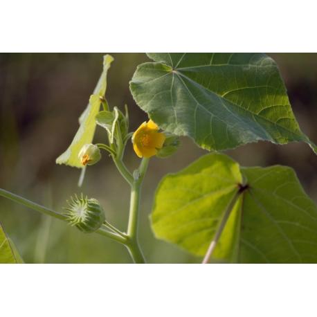 Dissuasore BioDinamico per Cencio molle - 1 lt