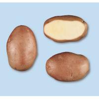 Patata DESIREE pezzatura 35/55S