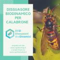 Dissuasore BioDinamico per Calabrone - 1 lt