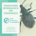 Dissuasore BioDinamico per Oziorrinco - 1L