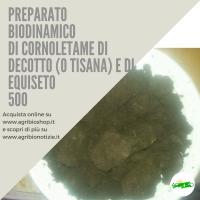 500 CORNOLETAME CON DECOTTO (O TISANA) DI EQUISETO