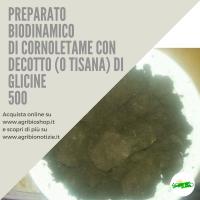 500 CORNOLETAME CON DECOTTO ( O TISANA) DI GLICINE