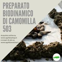 503 PREPARATO DI CAMOMILLA