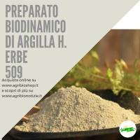 509 PREPARATO DI ARGILLA