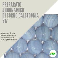 517 CORNO CALCEDONIA