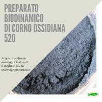 520 CORNO OSSIDIANA / GRANATO
