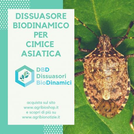 Dissuasore biodinamica per cimice asiatica 1l for Cimice marrone