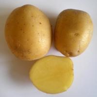 Patata MARABEL pezzatura 35/50