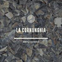 CORNUNGHIA