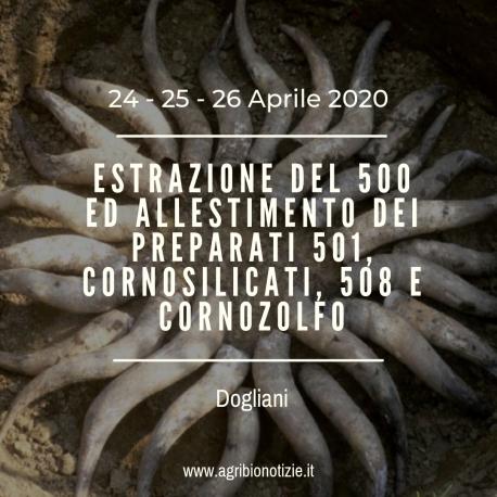 ESTRAZIONE DEL 500 ED ALLESTIMENTO DEI PREPARATI 501, CORNOSILICATI, 508 E CORNOZOLFO