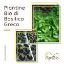 VASCHETTA DI PIANTINE BIO DI BASILICO GRECO (confezione da 6 piante)