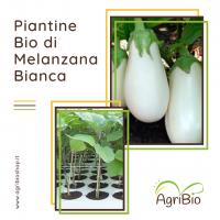 VASCHETTA DI PIANTINE BIO DI MELANZANA BIANCA (confezione da 4 piante)