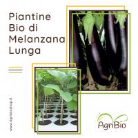 VASCHETTA DI PIANTINE BIO DI MELANZANA LUNGA (confezione da 4 piante)