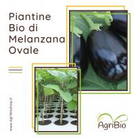 VASCHETTA DI PIANTINE BIO DI MELANZANA OVALE (confezione da 4 piante)