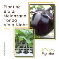 VASCHETTA DI PIANTINE BIO DI MELANZANA TONDA VIOLA (confezione da 4 piante)