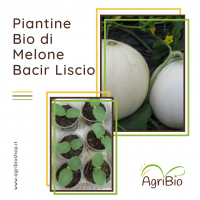 VASCHETTA DI PIANTINE BIO DI MELONE LISCIO (confezione da 4 piante)