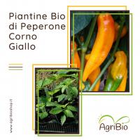 VASCHETTA DI PIANTINE BIO DI PEPERONE CORNO GIALLO (confezione da 4 piante)