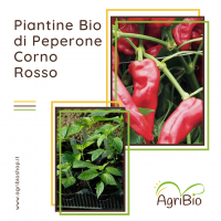 VASCHETTA DI PIANTINE BIO DI PEPERONE CORNO ROSSO (confezione da 4 piante)
