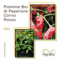 PIANTINE DI PEPERONE QUADRATO ROSSO / GIALLO BIO