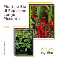 VASCHETTA DI PIANTINE BIO DI PEPERONE LUNGO PICCANTE (confezione da 4 piante)