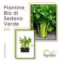 VASCHETTA DI PIANTINE BIO DI SEDANO VERDE (confezione da 6 piante)
