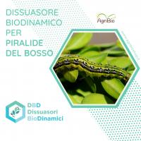 Dissuasore BioDinamico per Piralide del Bosso - 1 lt