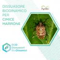 Dissuasore BioDinamico per Cimice asiatica - 1L