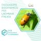 Dissuasore Biodinamico per Lachnaia italica- 1 lt